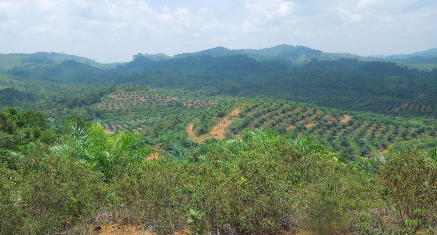 FPP_EHR Press Release on complaint to RSPO about GAR 19 March 2020